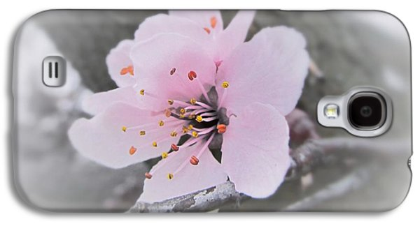 Cherry Blossoms Galaxy S4 Cases - Sakura Blossom Galaxy S4 Case by Marianna Mills