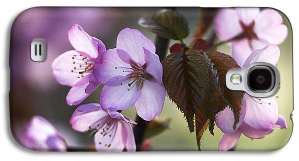 Cherry Blossoms Pyrography Galaxy S4 Cases - Sakura Galaxy S4 Case by Vetre Antanaviciute Meskauskiene