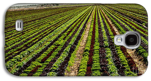 Romaine Galaxy S4 Cases - Salad Bowl Lettuce Galaxy S4 Case by Robert Bales