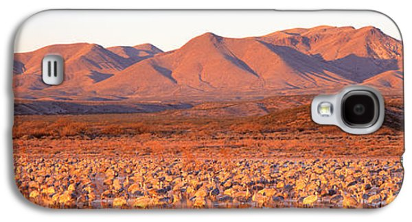 Wildlife Refuge. Galaxy S4 Cases - Sandhill Crane, Bosque Del Apache, New Galaxy S4 Case by Panoramic Images