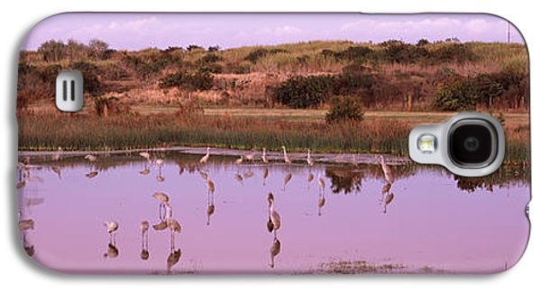 Reflections Of Sky In Water Galaxy S4 Cases - Sandhill Cranes Grus Canadensis Galaxy S4 Case by Panoramic Images