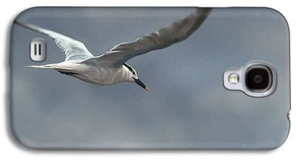 Shore Digital Art Galaxy S4 Cases - Sandwich Tern Galaxy S4 Case by Aaron Blaise