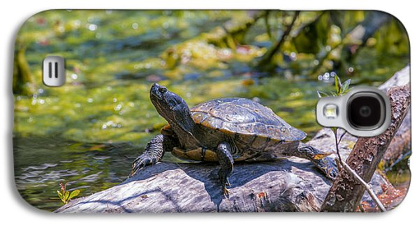 Slider Photographs Galaxy S4 Cases - Sardis Pond Turtle Galaxy S4 Case by Sharon  Talson