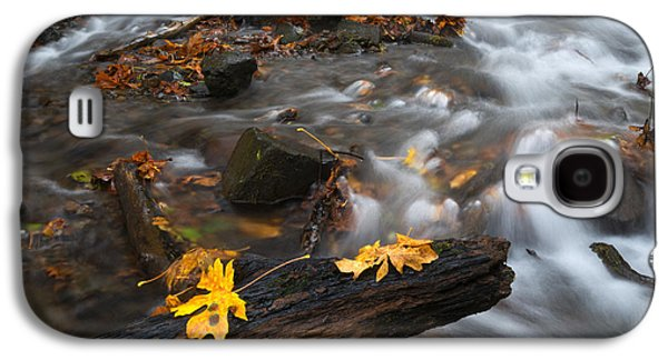 Maple Season Galaxy S4 Cases - Scattered Gold Galaxy S4 Case by Mike Dawson