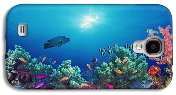 Schools Of Fish Galaxy S4 Cases - School Of Fish Swimming Near A Reef Galaxy S4 Case by Panoramic Images