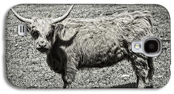 Highlands Digital Art Galaxy S4 Cases - Scottish Highland Cow In Maine Farm Field Galaxy S4 Case by Keith Webber Jr