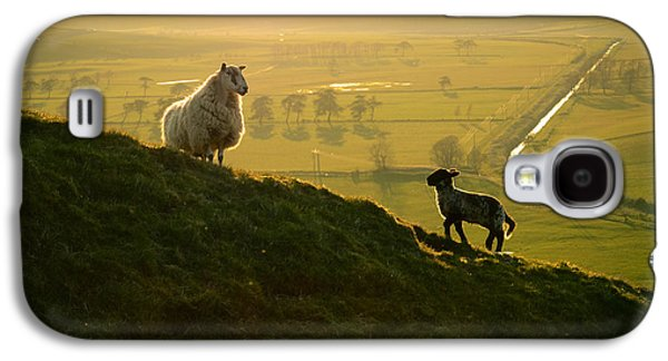 Scottish Sheep And Lamb Galaxy S4 Case by Mr Doomits