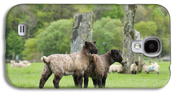 Rural Scenes Photographs Galaxy S4 Cases - Scottish Sheep Galaxy S4 Case by Juli Scalzi
