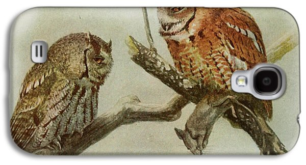Ornithology Paintings Galaxy S4 Cases - Screech Owls Galaxy S4 Case by Louis Agassiz Fuertes