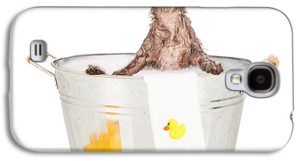 Groom Galaxy S4 Cases - Scruffy Terrier in a Bath Tub Galaxy S4 Case by Susan  Schmitz