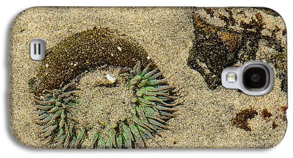Must See Places In California Galaxy S4 Cases - Sea Anenome Half Buried in the Sand Galaxy S4 Case by Artist and Photographer Laura Wrede