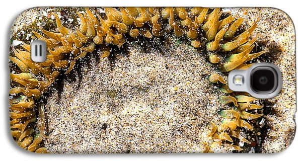 Famous Highway 1 In California Galaxy S4 Cases - Sea Anenome in the Sand Galaxy S4 Case by Artist and Photographer Laura Wrede