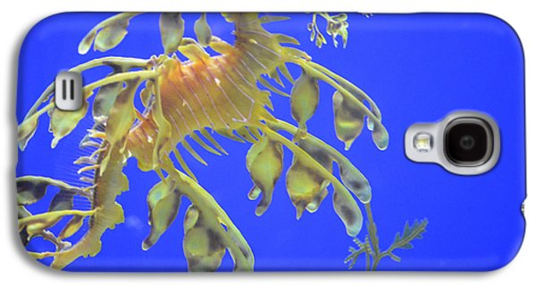 Rare Moments Galaxy S4 Cases - Sea Dragon Galaxy S4 Case by Randy King