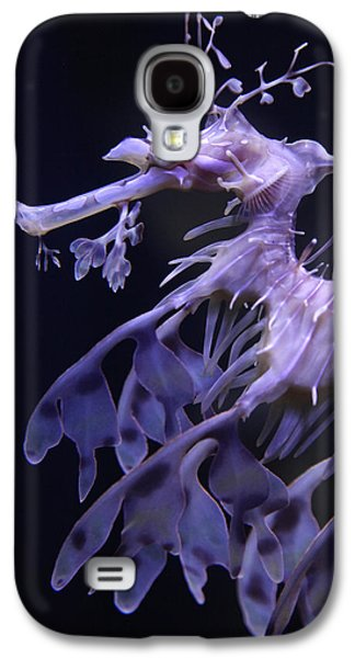 Underwater Photos Galaxy S4 Cases - Sea Horse Galaxy S4 Case by Donna Corless