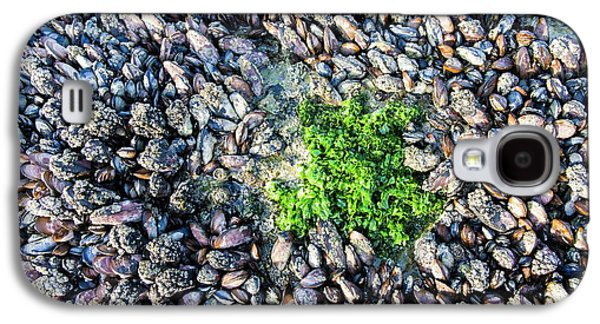 Sea Lettuce And Mussels Galaxy S4 Case by Peter Chadwick