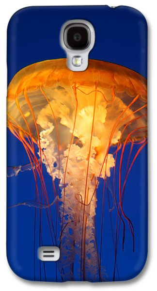 Underwater Photos Galaxy S4 Cases - Sea Nettles 12 Galaxy S4 Case by Donna Corless