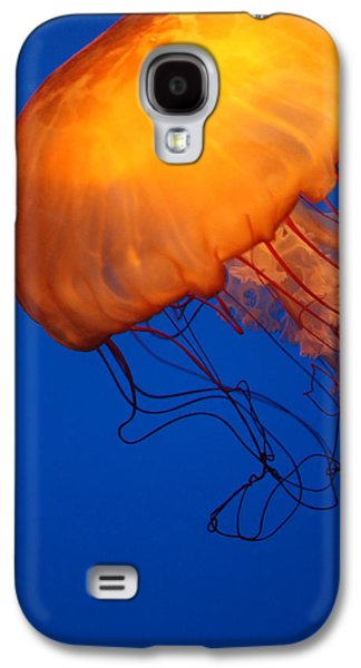 Underwater Photos Galaxy S4 Cases - Sea Nettles Galaxy S4 Case by Donna Corless