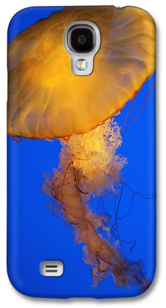 Underwater Photos Galaxy S4 Cases - Sea Nettles v 3 Galaxy S4 Case by Donna Corless