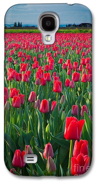 Agronomy Galaxy S4 Cases - Sea of Red Tulips Galaxy S4 Case by Inge Johnsson