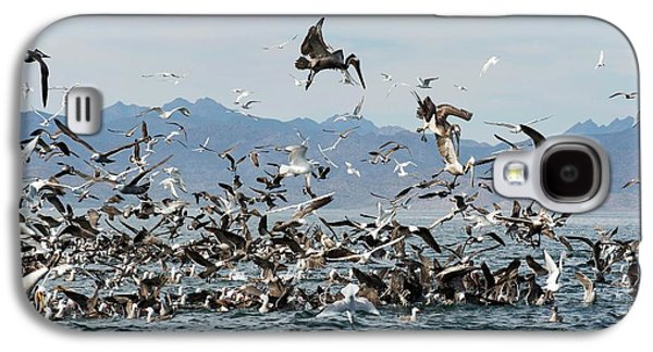 Seabirds Feeding Galaxy S4 Case by Christopher Swann