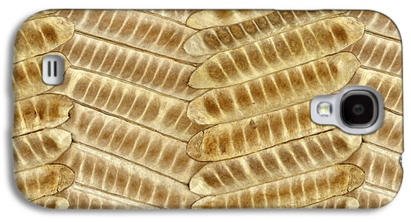 Digital Pyrography Galaxy S4 Cases - Seed Pods Galaxy S4 Case by Bedros Awak