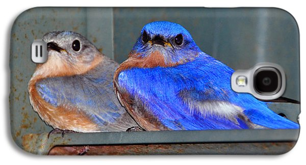 Young Birds Galaxy S4 Cases - Seeking Shelter Galaxy S4 Case by Al Powell Photography USA