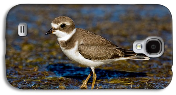 Us Wildllife Galaxy S4 Cases - Semipalmated Plover Galaxy S4 Case by Anthony Mercieca