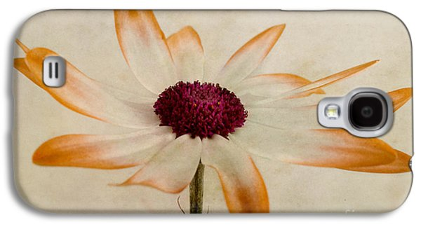 Close Focus Floral Galaxy S4 Cases - Senetti pericallis Orange Tip Galaxy S4 Case by John Edwards