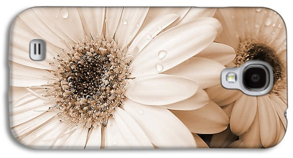 Botanical Galaxy S4 Cases - Sepia Gerber Daisy Flowers Galaxy S4 Case by Jennie Marie Schell