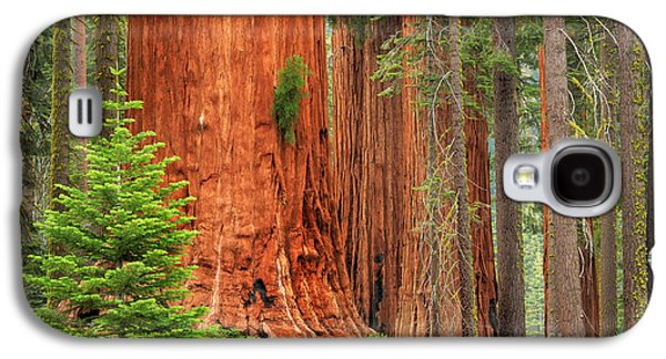 Solitude Photographs Galaxy S4 Cases - Sequoias Galaxy S4 Case by Inge Johnsson