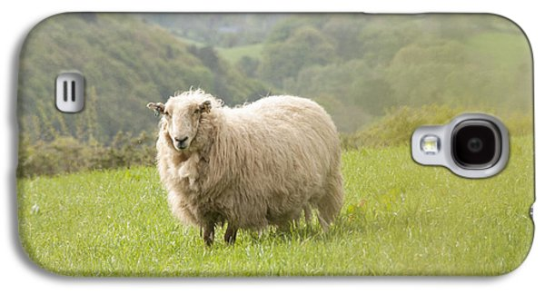 Rural Scenes Photographs Galaxy S4 Cases - Sheep in Pasture Galaxy S4 Case by Juli Scalzi