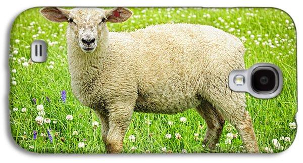 Adorable Galaxy S4 Cases - Sheep in summer meadow Galaxy S4 Case by Elena Elisseeva