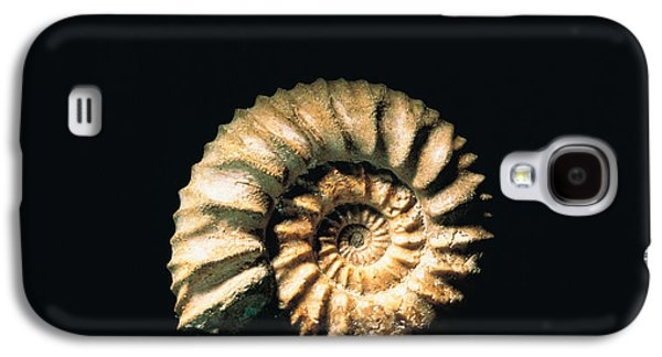 Studio Photography Galaxy S4 Cases - Shell On Black Background Galaxy S4 Case by Panoramic Images