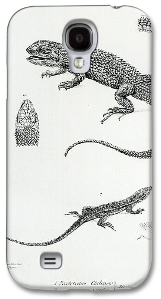 Nature Study Paintings Galaxy S4 Cases - Shingled Iguana Galaxy S4 Case by English School