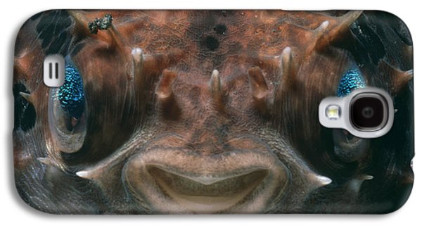Short-spined Porcupine Fish Galaxy S4 Case by Jeff Rotman