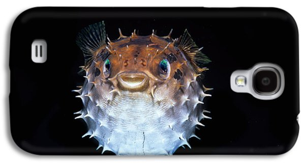 Short-spined Porcupinefish Galaxy S4 Case by Jeff Rotman