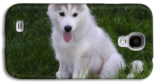 Puppy Digital Art Galaxy S4 Cases - Siberian Huskie Pup Galaxy S4 Case by Bill Cannon