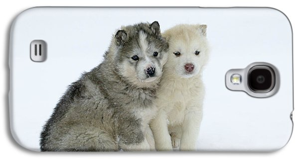 Dogs In Snow. Galaxy S4 Cases - Siberian Husky Puppies Galaxy S4 Case by M. Watson