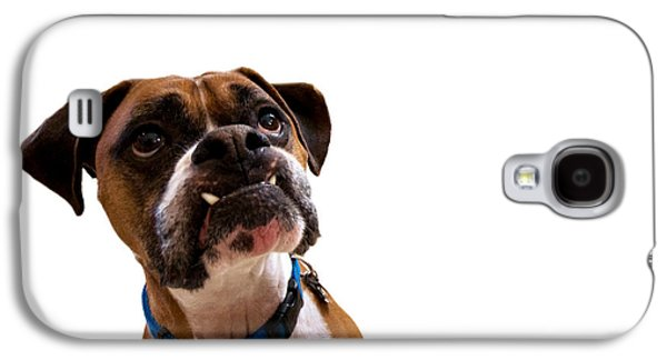 Boxer Galaxy S4 Cases - Silly Boxer Dog Galaxy S4 Case by Stephanie McDowell