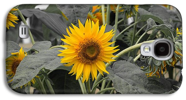 Sunflower Patch Galaxy S4 Cases - Single Yellow Sunflower Galaxy S4 Case by Derrick Jacobson