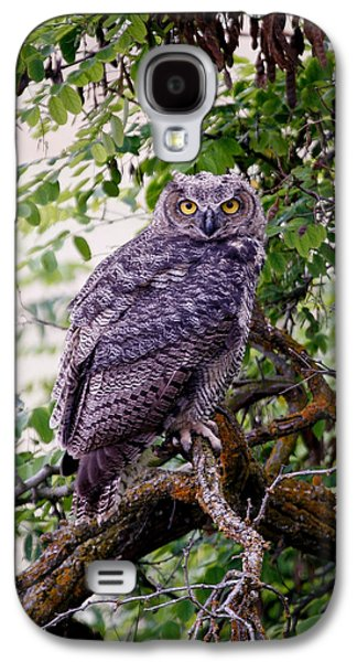 Barn Pen And Ink Galaxy S4 Cases - Sitting Owl Galaxy S4 Case by Athena Mckinzie