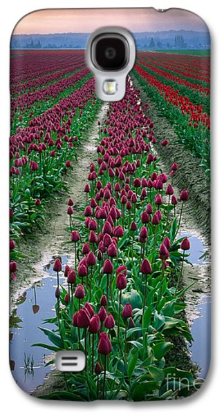 Agronomy Galaxy S4 Cases - Skagit Valley Tulips Galaxy S4 Case by Inge Johnsson
