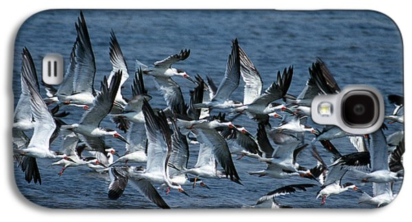 Photos Of Birds Galaxy S4 Cases - Skimmers Galaxy S4 Case by Skip Willits
