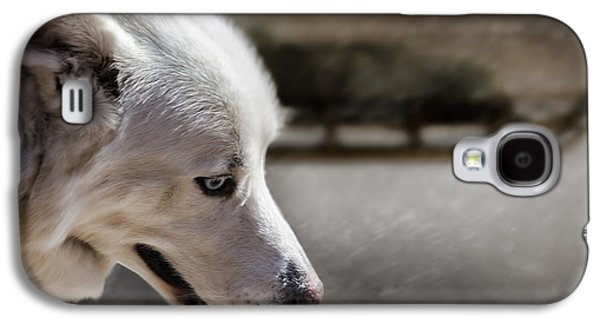 Friends Photographs Galaxy S4 Cases - Sled Dog Galaxy S4 Case by Bob Orsillo
