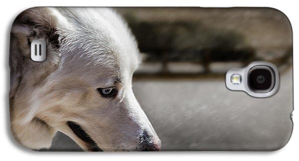 Sports Photographs Galaxy S4 Cases - Sled Dog Galaxy S4 Case by Bob Orsillo