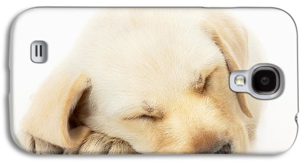 Best Friend Photographs Galaxy S4 Cases - Sleeping Labrador Puppy Galaxy S4 Case by Johan Swanepoel