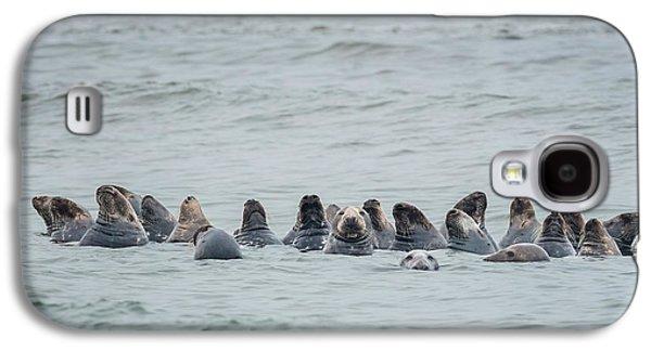 Ocean Mammals Galaxy S4 Cases - Sleeping Seals Galaxy S4 Case by Bill  Wakeley