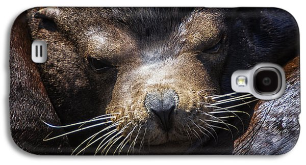 Sleepyhead Sea Lion Galaxy S4 Case by Mark Kiver