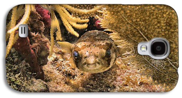 Porcupine Fish Galaxy S4 Cases - Smile Your on Camera Galaxy S4 Case by Ray Mongeau