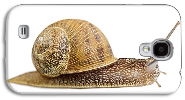Helix Galaxy S4 Cases - Snail Galaxy S4 Case by Elena Elisseeva